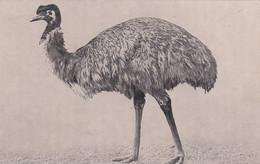UNIDENTIFIED LARGE BIRD - Uccelli
