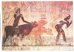 ►     Egypte  Mastaba De Ti  Saqqarah  Passage Du Gué - Non Classificati