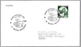 15 EXPOSICION MICOLOGICA -  MICOLOGICAL EXHIBITION. Setas - Mushrooms. Putifigari, Sassari, 1997 - Mushrooms