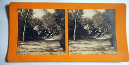 PHOTO STEREO FORET DE FONTAINEBLEAU LA ROCHE SUSPENDUE - Stereoscopic