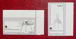 TAAF 2015 - Crozet : Ectemnorhinus Vanhoeffenianus Et Amalopteryx Maritima - Nuovi