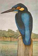 Animaux - Oiseaux - Martin-pêcheur - Europe - Asie - Dessin - Editions N Boubée Et Cie Paris - Carte Neuve - CPM - Voir - Oiseaux