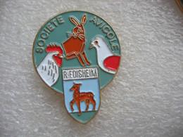 Pin's De La Société Avicole De La Ville De RIEDISHEIM (Dépt 68). Poules, Lapins, Pigeons - Animali