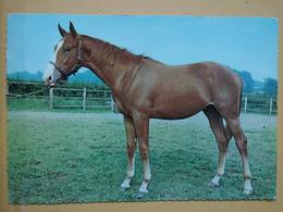 KOV 505-10 - HORSE, CHEVAL - Paarden