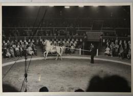 Circus - Cirque // Carte Photo - RPPC To Identify, Prob. Belgie No. 2. // Horse Act 19?? - Circus