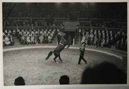 Circus - Cirque // Carte Photo - RPPC To Identify, Prob. Belgie No. 3. // Horse Act 2.19?? - Circus