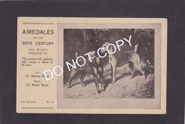 Dog Card -    Spratts Print Advertising Card.  Airedales.   After Wardles Painting 1904. Card No.20. - Perros
