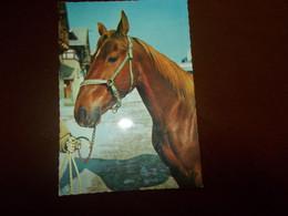 B785  Cavallo No Viaggiata - Caballos