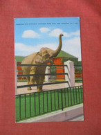 Elephant Begging For A Peanut New Orleans     Ref  4994 - Elefantes