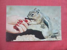 Hand Out Squirriel       Ref  4994 - Sin Clasificación