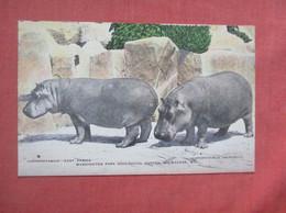 Hippopotamuses Zoo Milwaukee Wi      Ref  4994 - Hipopótamos
