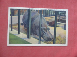Cleopatra Hippopotamus Kansas City Zoo     Ref  4994 - Hipopótamos