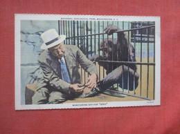 Manicuring Day For Soko   Washington DC Zoo     Ref  4994 - Sin Clasificación