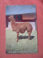 Llama Detroit Zoo      Ref  4994 - Sin Clasificación