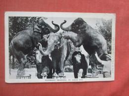 Elephants Training St Louis Zoo    Ref  4994 - Elefantes