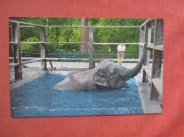 Toots Baby Elephant In Her Bath Toledo Zoo     Ref  4994 - Elefantes
