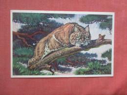 Bobcat     Ref  4994 - Sin Clasificación