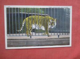 Tiger  At Chicago Zoo     Ref  4995 - Tigres