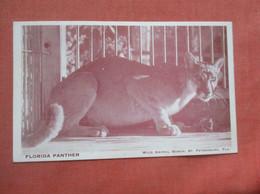 Florida Panther     Ref  4995 - Sin Clasificación
