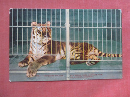 Sentenced For Life Man Eating Tiger Los Angeles Zoo      Ref  4995 - Tigres