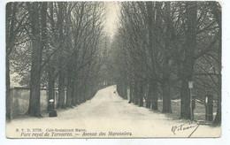 Tervuren Tervueren Parc Royal  Avenue Des Marronniers DVD  11724 - Tervuren