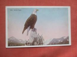 Alaska Eagle       Ref  4995 - Pájaros