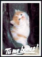 """ANIMALS -CATS -  """" Tu Me Bottes!"""". ( Photo  Pierre Yves)  Carte Postale - Gatos"""