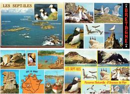 Lot 8 Cpm - Oiseau MACAREUX COMORANS FOUS DE BASSAN GOELAND ILE ROUZIC Pierre Insolite - Uccelli