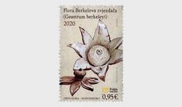 Montenegro MNH ** 2020 Flora - Berkeley's Earthstar Mushroom Pilz - Montenegro