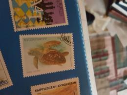 AZERBAIJAN TARTARUGHE 1 VALORE - Sonstige - Amerika