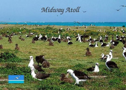 Midway Atoll Albatrosses New Postcard - Isole Midway