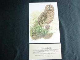 """BELG.BUZIN  : """" LE HIBOU DES MARAIS """" A4 Tekening Avec Certificat  ,signé - 1985-.. Birds (Buzin)"""