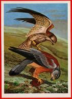 17264 Egorov Birds Fauna Zoology 1988 Kestrel Falcon Hunting Predator Prey Rodent Hamster USSR Soviet Card - Birds