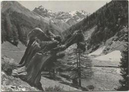 CPSM Suisse  Val Trupchum Et Piz Fier - Otros