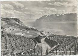 CPSM Suisse  Vignoble De Lavaux  Et Lac Léman - VD Vaud