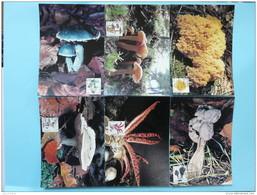 Carte Maximum Card (x6) Champignons Mushrooms Luxembourg 2004 - Mushrooms