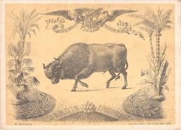 GAND - Lithographie - Société Royale D'histoire Naturelle - 1881 - J LOBEL- Matthys - Jardin Zoologique Taureau - Lithographies