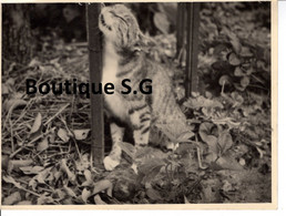 Photo Animaux Chat Exterieur Jardin Nature 12x9cm - Other