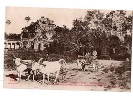 CAMBODGE CHAUSSE CONDUISANT A LATOUR CENTRALE TEMPLE CHARS A BOEUFS ANIMEE - Cambodja