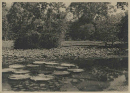 Viet-Nam - SAÏGON - Jardin Botanique - Luoghi