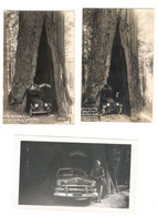 Vintage Postcard 1920's The Doyst Tree (The Redwood Shrine) 2 Postcards And 1 Photo Unused See Description BB - Other