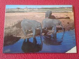 SPAIN POSTAL POST CARD SAFARI PARK VERGEL ALICANTE COSTA BLANCA ELEFANTES BEBIENDO AGUA ELEPHANTS DRINKING WATER ESPAGNE - Delphine