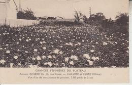 CALUIRE ET CUIRE - Grandes Pépinières Du Plateau - Antoine RIVIERE Fils - Champs De Pivoines - Caluire Et Cuire