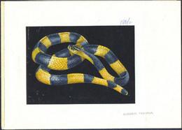 TANZANIA (1996) Banded Krait (Bungarus Fasciatus).  Original Artwork, Watercolor On Posterboard. Scott 1473 - Tanzania (1964-...)