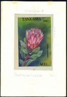 TANZANIA (1994) Protea Lacticolor. Original Artwork, Watercolor On Posterboard. Scott No 1309, Yvert No 1708. - Tanzania (1964-...)