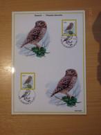 A.Buzin 3672 Steenuil A5 2 Stempels RRRR - 1985-.. Vogels (Buzin)