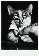 ► CHAT - CAT - KATZE Lunettes Avec Ciseaux (Serie Zwat-Wit Foto Photo Noir Et Blanc Black & White) - Katten