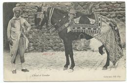 CPA TUNISIE / CHEVAL ET CAVALIER / 1905 TUNIS  POUR LIEGE BELGIQUE - Tunisia
