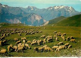 Photo Cpsm Cpm Animaux Moutons Troupeau Dans Les Alpes 1984 Pour Bagnolet - Altri