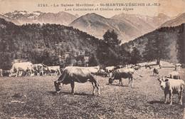 06-SAINT MARTIN VESUBIE-N°4228-D/0233 - Saint-Martin-Vésubie